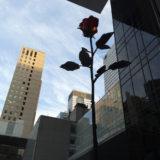 MOMA garden flower